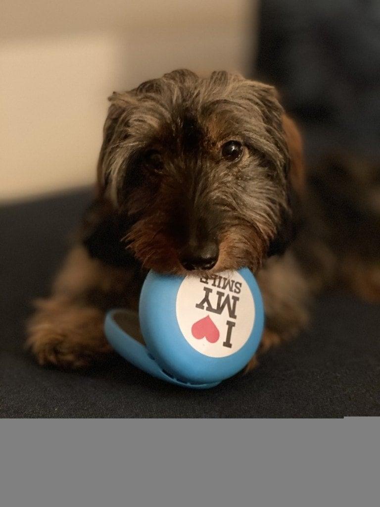 Hund mit Alignerbox